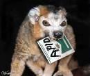 Lemur_11.jpg